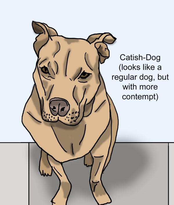 Catish Dog